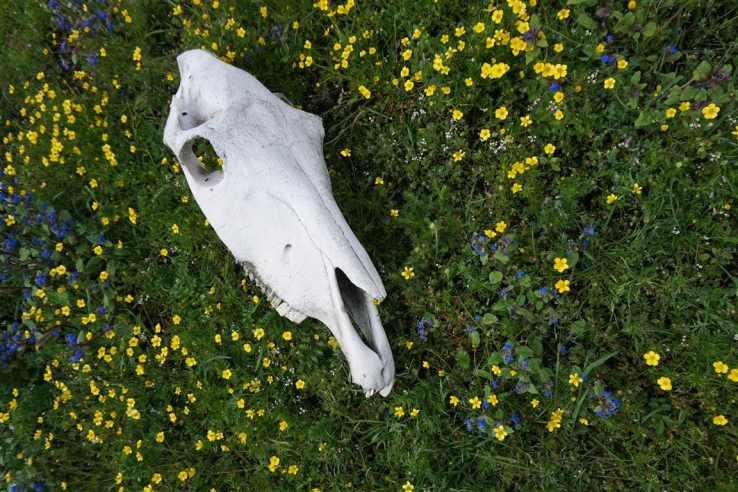 espinosa-animalskull-meadow-trekking
